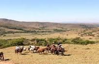Traga seu cavalo! Destinos que aceitam grupos de cavaleiros/amazonas com seus próprios cavalos.