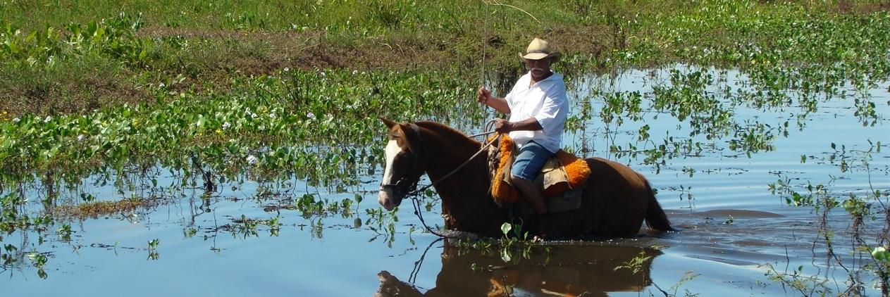 O melhor do Pantanal