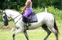 Clinicas - Horsemanship