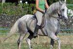 Study & Ride - ensino de idiomas em centros equestres