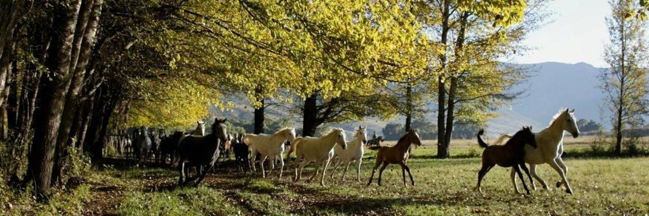 Cavalgada - Safari em Witteberg- + 300 Cavalos Árabes e Boerperd