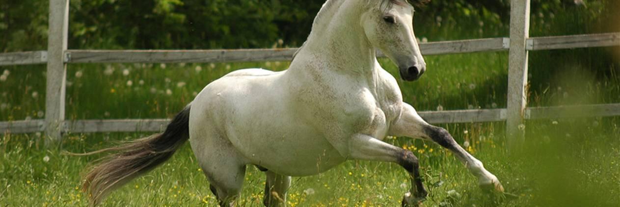 Cavalgada no Melhor do Alentejo