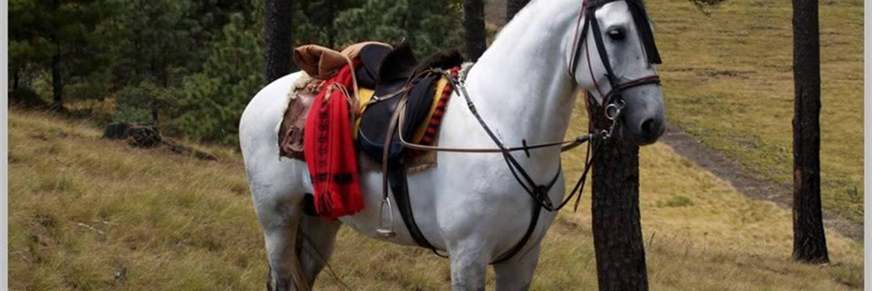 Cavalgada Valle do Bravo