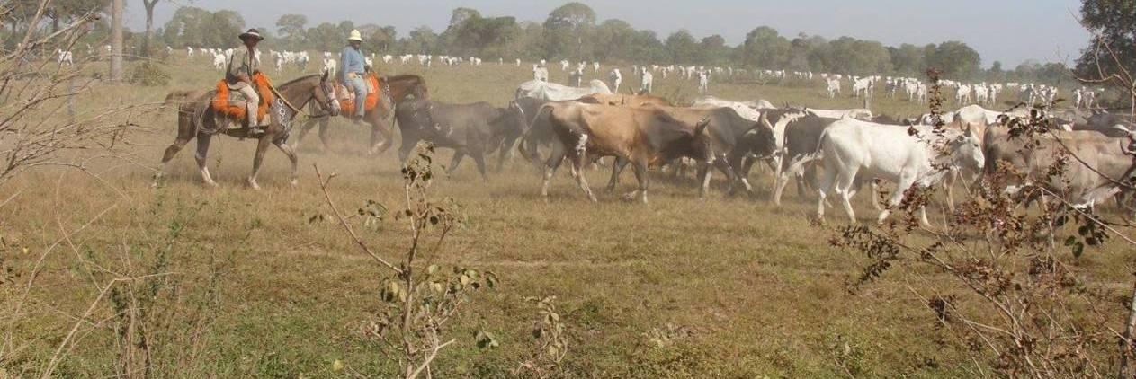 Lida com gado