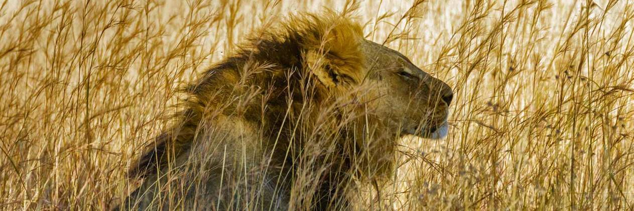 Safári no Parque Nacional