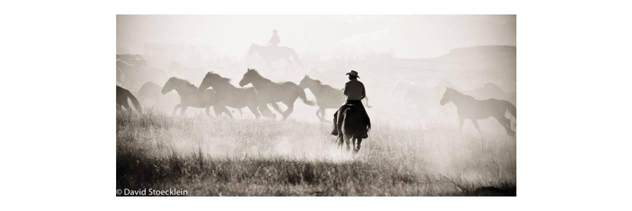 Arizona Rancho Tanque