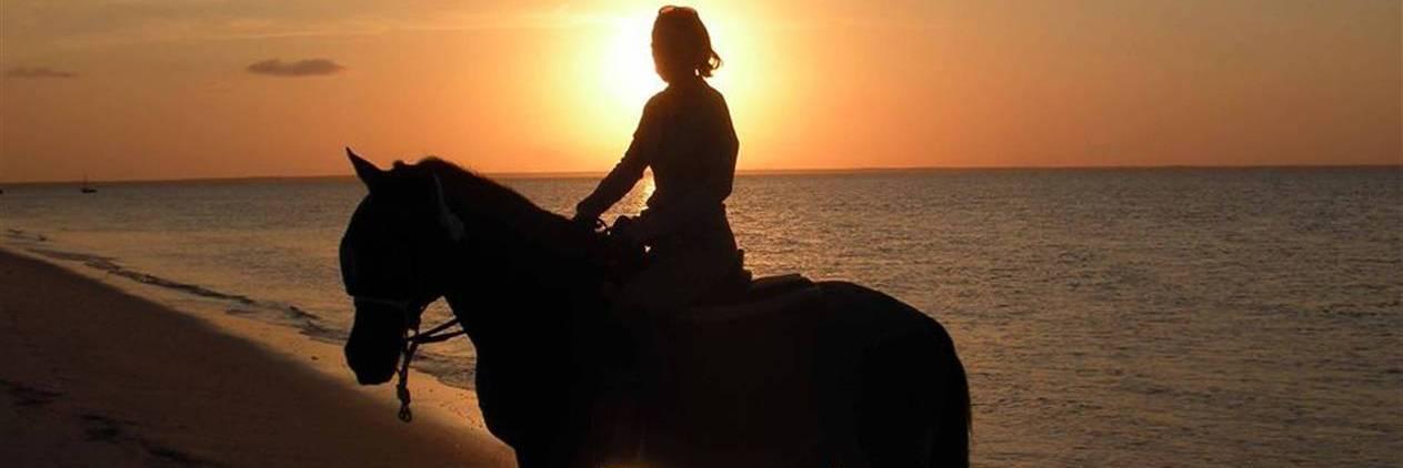 Cavalgada no Paraíso Tropical