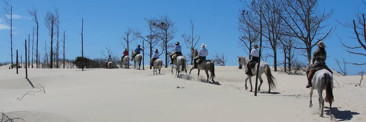 Cavalgada:  Cavalgada do Mar - Cavalos Lusitanos no Parque Nacional Lagoa dos Peixes