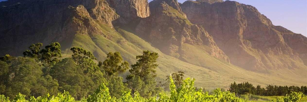 Cavalgada nos vinhedos de Cape Town