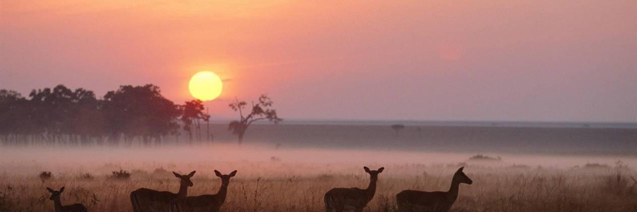Kenya Horse Safaris